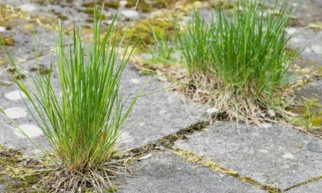 Hoe houd je onkruid in de tuin in bedwang?